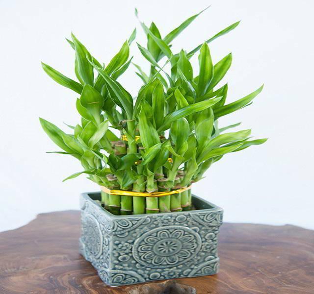 5 loại cây dễ chăm dễ trồng lại tốt cho phong thủy, rước về nhà tụ lộc gấp đôi-1