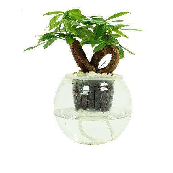 5 loại cây dễ chăm dễ trồng lại tốt cho phong thủy, rước về nhà tụ lộc gấp đôi-4
