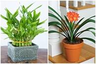 5 loại cây dễ chăm dễ trồng lại tốt cho phong thủy, rước về nhà tụ lộc gấp đôi
