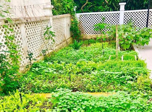 Không chỉ từ thiện khắp nơi, Thủy Tiên còn nổi tiếng thảo ăn, trồng rau được cho hết-5