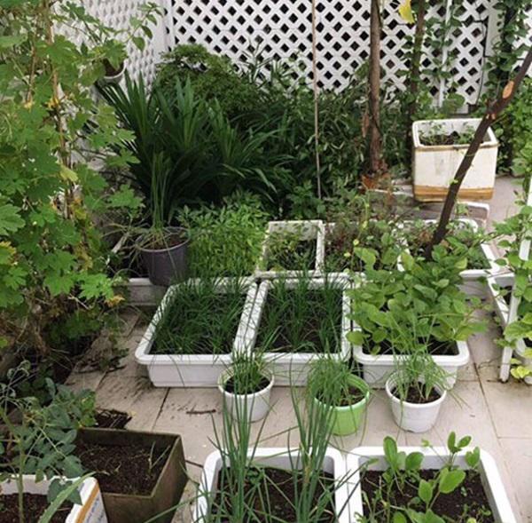 Không chỉ từ thiện khắp nơi, Thủy Tiên còn nổi tiếng thảo ăn, trồng rau được cho hết-6