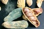4 thứ trong căn bếp là khởi nguồn của bệnh ung thư gan, chứa chất độc khét tiếng nhất thế giới