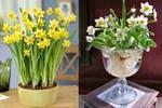 Nhà giàu thường xuyên để loại hoa này trong phòng khách, ai biết được cũng muốn học theo