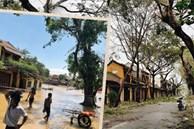 Hội An tan hoang sau bão số 9, những rặng hoa giấy rực rỡ ngày thường nay bỗng hóa xác xơ, nước sông Hoài dâng lên ngập cả nhiều tuyến đường trung tâm phố cổ