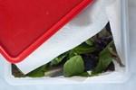 Chỉ với vật dụng quen thuộc này, chị em có thể bảo quản rau củ trong tủ lạnh cả 1 tuần, đảm bảo rau vẫn tươi xanh như vừa mới mua!