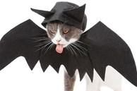 Chủ nhân rút hầu bao, chi đậm sắm đồ Halloween cho thú cưng