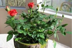 Muốn xui xẻo tránh xa căn nhà, trồng ngay 4 loại cây phú quý này