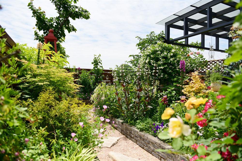 Người đàn ông sở hữu vườn hoa trên sân thượng đẹp như thiên đường ai ngắm cũng mê-1
