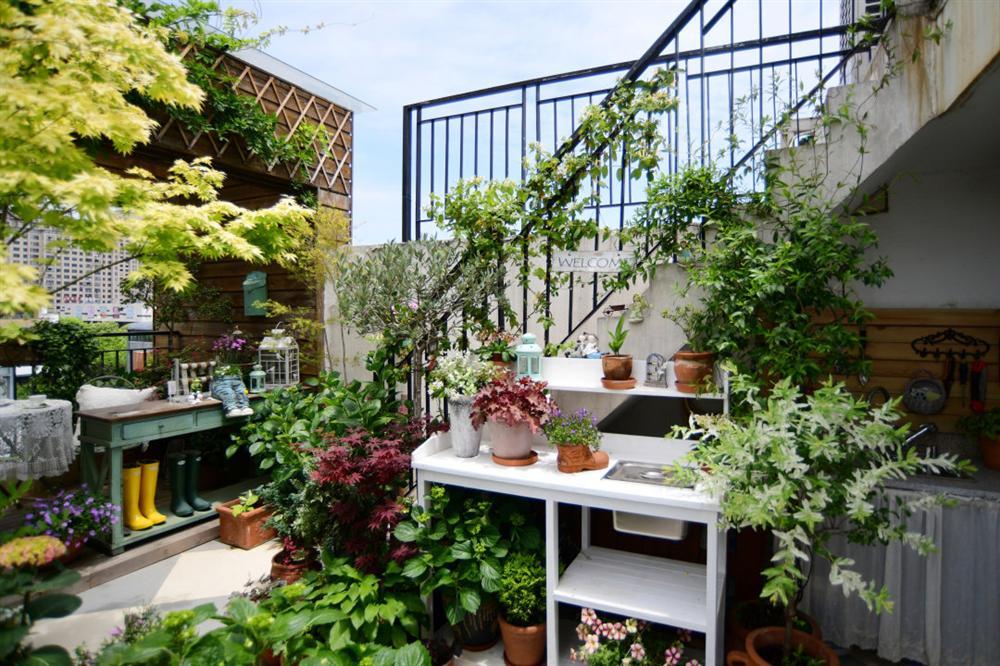Người đàn ông sở hữu vườn hoa trên sân thượng đẹp như thiên đường ai ngắm cũng mê-2