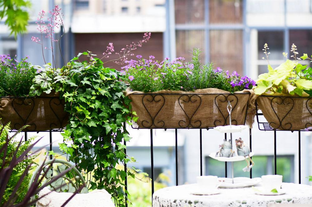 Người đàn ông sở hữu vườn hoa trên sân thượng đẹp như thiên đường ai ngắm cũng mê-6