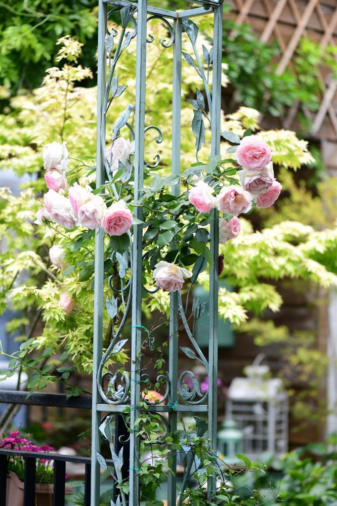 Người đàn ông sở hữu vườn hoa trên sân thượng đẹp như thiên đường ai ngắm cũng mê-10