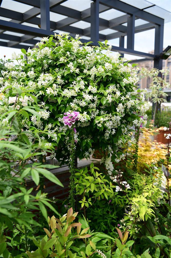 Người đàn ông sở hữu vườn hoa trên sân thượng đẹp như thiên đường ai ngắm cũng mê-13