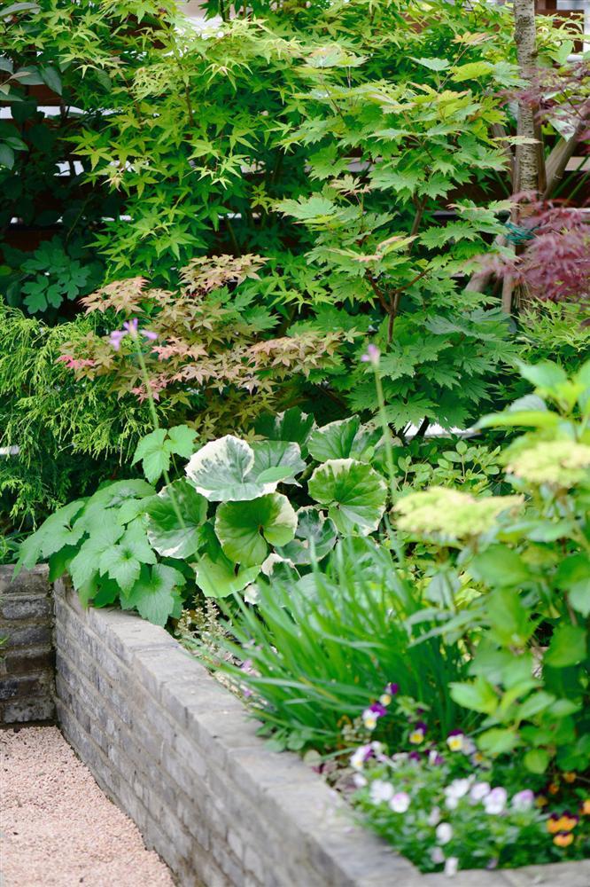 Người đàn ông sở hữu vườn hoa trên sân thượng đẹp như thiên đường ai ngắm cũng mê-15
