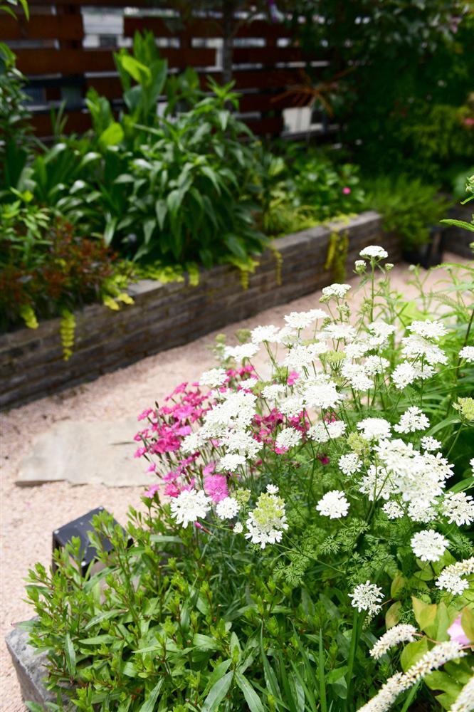 Người đàn ông sở hữu vườn hoa trên sân thượng đẹp như thiên đường ai ngắm cũng mê-16
