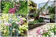 Người đàn ông sở hữu vườn hoa trên sân thượng đẹp như thiên đường ai ngắm cũng mê