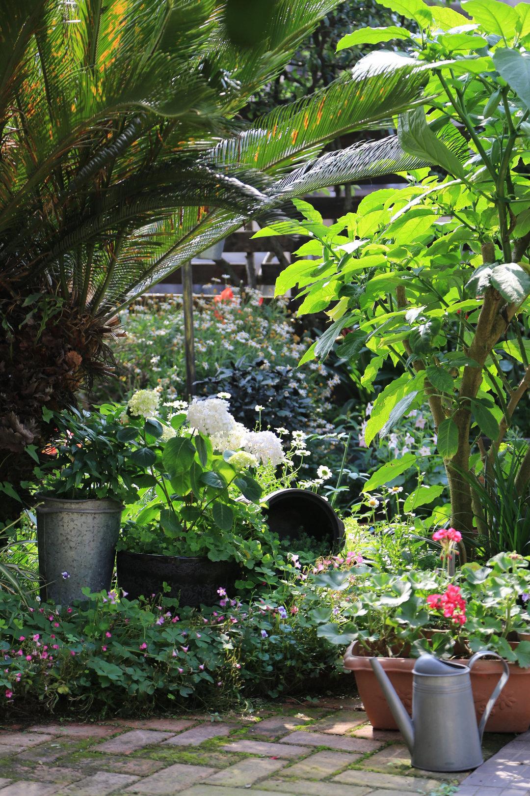 Khu vườn quanh năm chỉ có mùa xuân với hoa nở tưng bừng của cô giáo dạy Toán-10