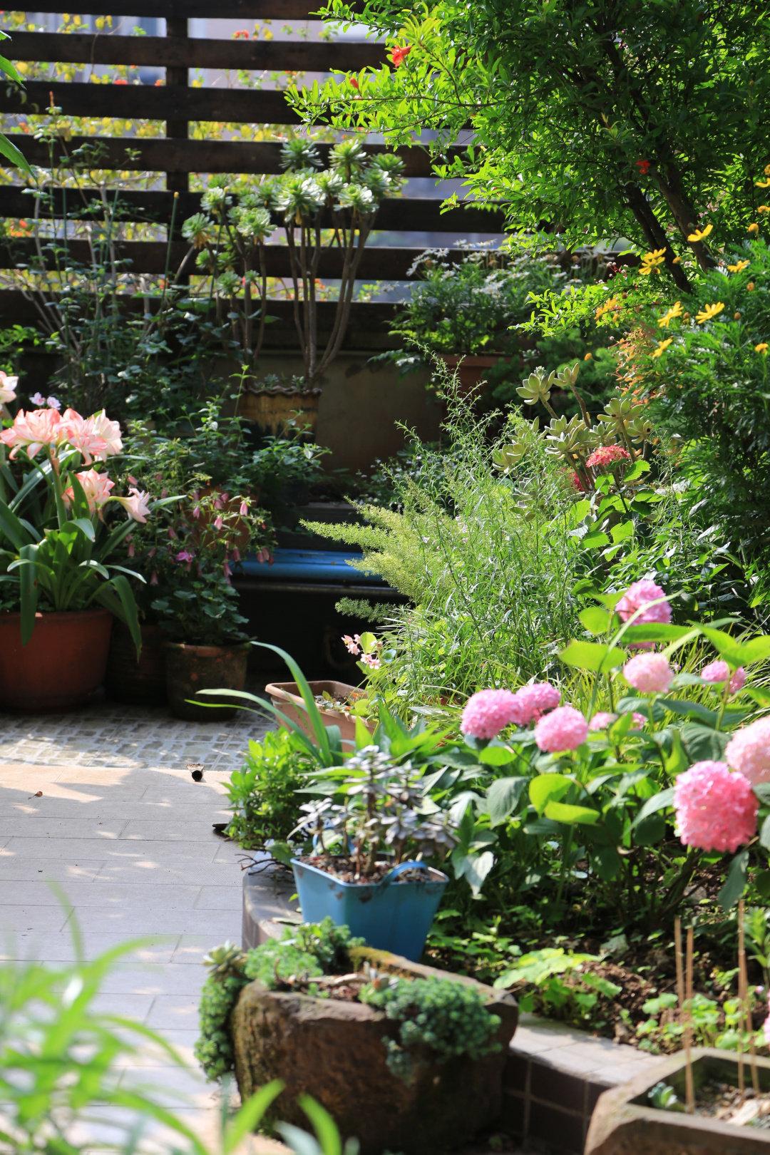 Khu vườn quanh năm chỉ có mùa xuân với hoa nở tưng bừng của cô giáo dạy Toán-11