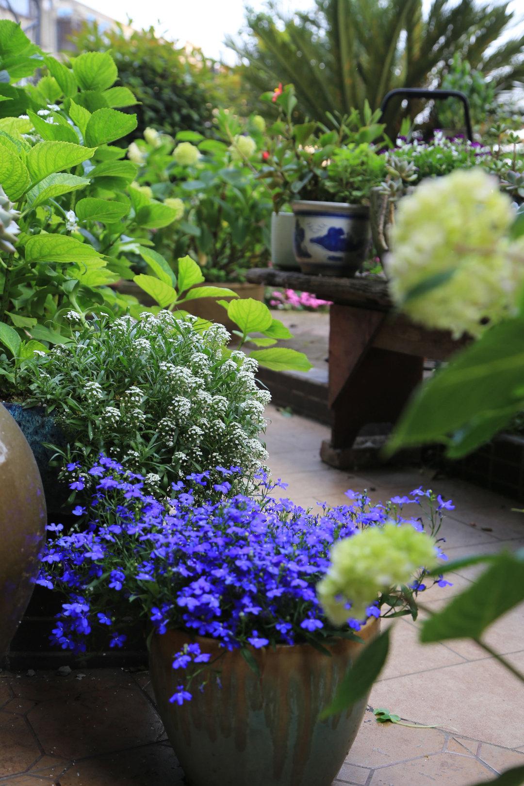 Khu vườn quanh năm chỉ có mùa xuân với hoa nở tưng bừng của cô giáo dạy Toán-7
