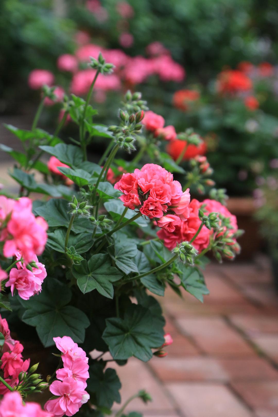 Khu vườn quanh năm chỉ có mùa xuân với hoa nở tưng bừng của cô giáo dạy Toán-6