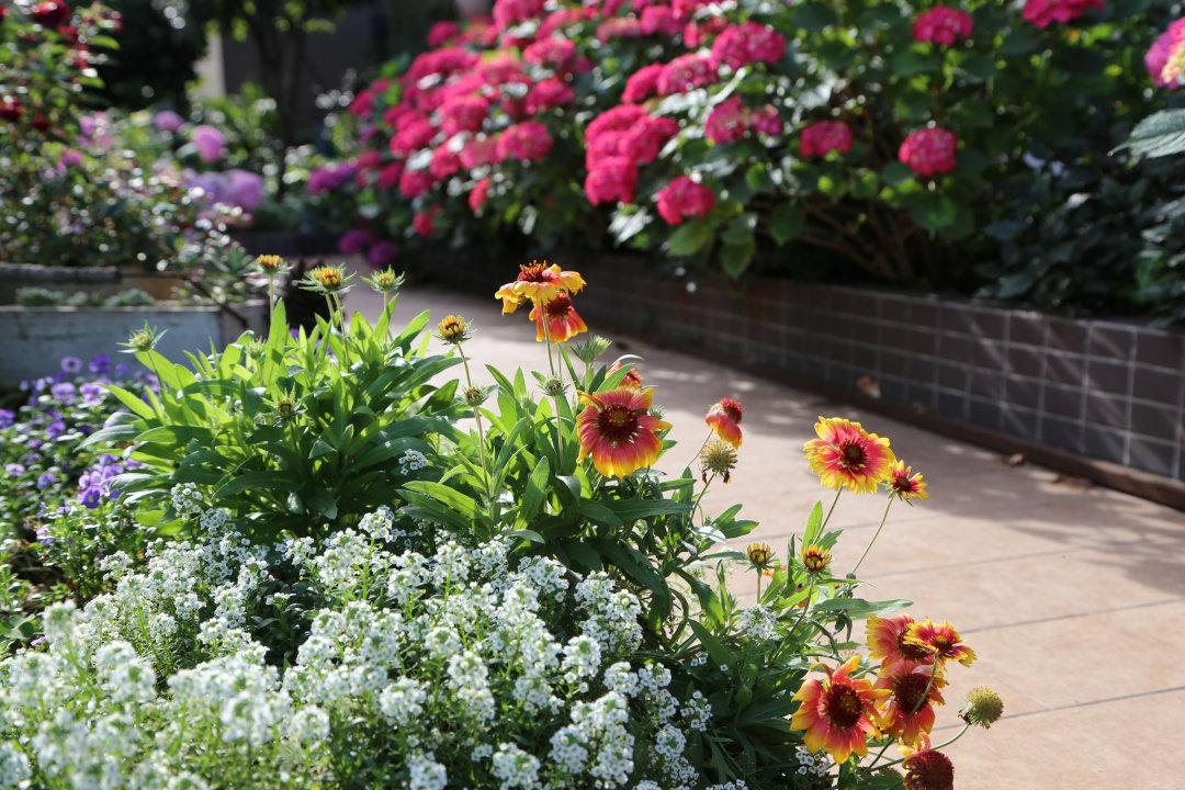 Khu vườn quanh năm chỉ có mùa xuân với hoa nở tưng bừng của cô giáo dạy Toán-3