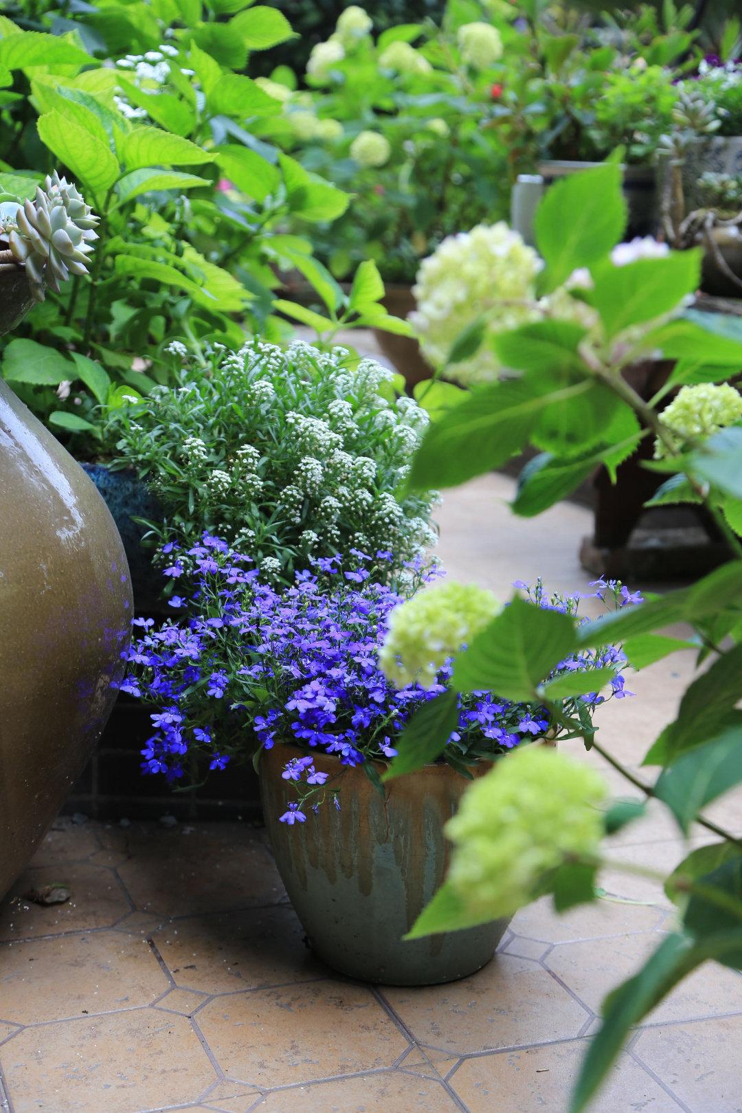 Khu vườn quanh năm chỉ có mùa xuân với hoa nở tưng bừng của cô giáo dạy Toán-9