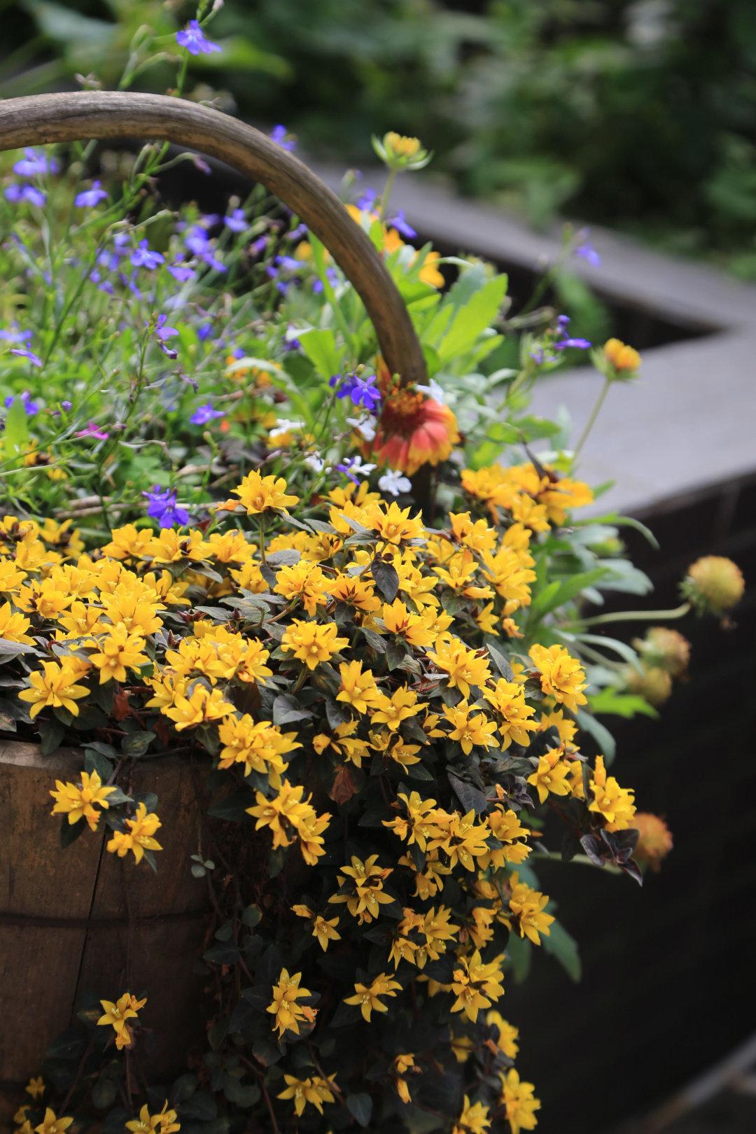 Khu vườn quanh năm chỉ có mùa xuân với hoa nở tưng bừng của cô giáo dạy Toán-15