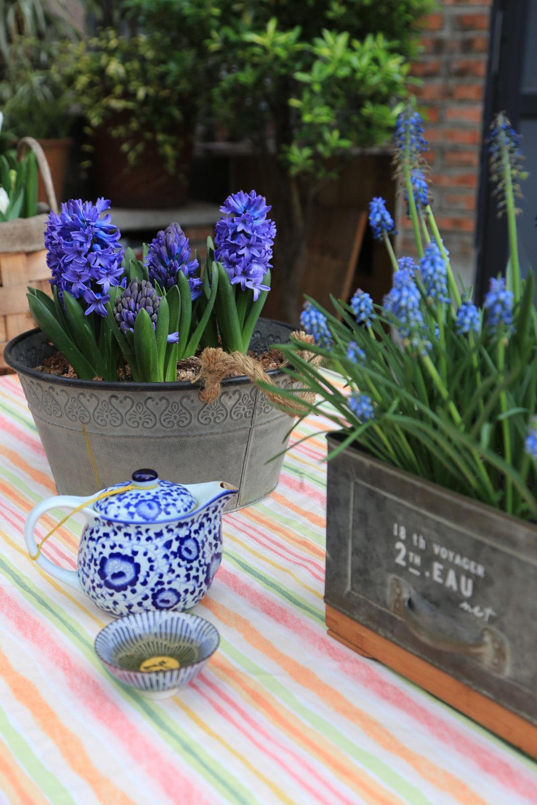 Khu vườn quanh năm chỉ có mùa xuân với hoa nở tưng bừng của cô giáo dạy Toán-14