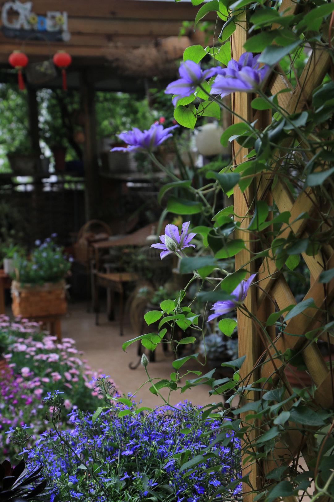 Khu vườn quanh năm chỉ có mùa xuân với hoa nở tưng bừng của cô giáo dạy Toán-20