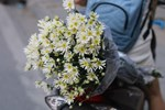 Loài từng là hoa dại ven đường thành đặc sản Hà Nội, nông dân cắt không kịp bán-14