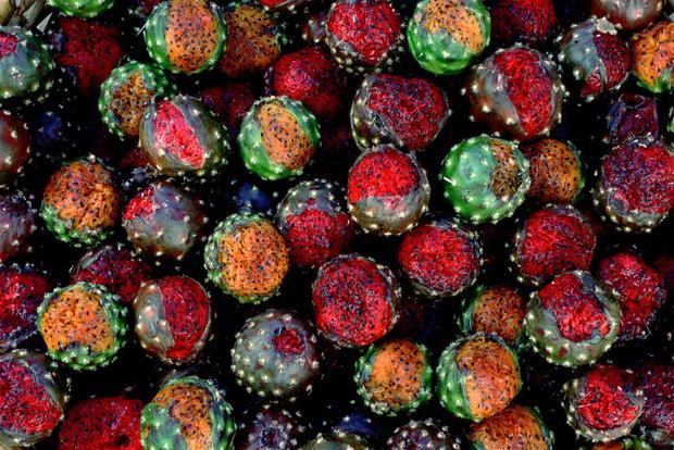 Thế giới có 5 loại thanh long màu sắc kỳ lạ, 4 loại xuất hiện tại Việt Nam-10
