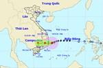 Cây gãy đổ la liệt khi bão số 12 quét qua Nha Trang-14