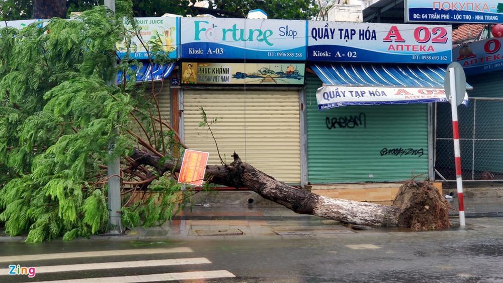 Cây gãy đổ la liệt khi bão số 12 quét qua Nha Trang-1