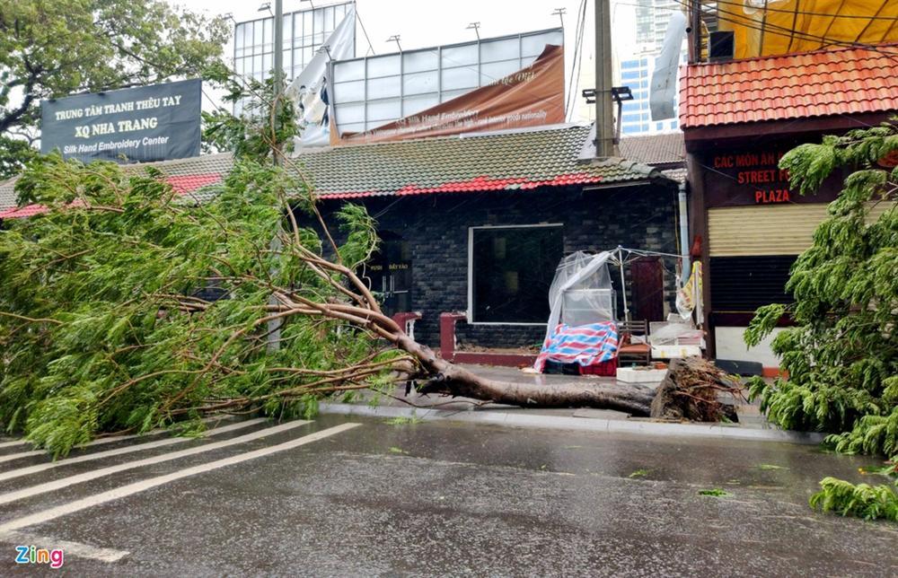 Cây gãy đổ la liệt khi bão số 12 quét qua Nha Trang-2