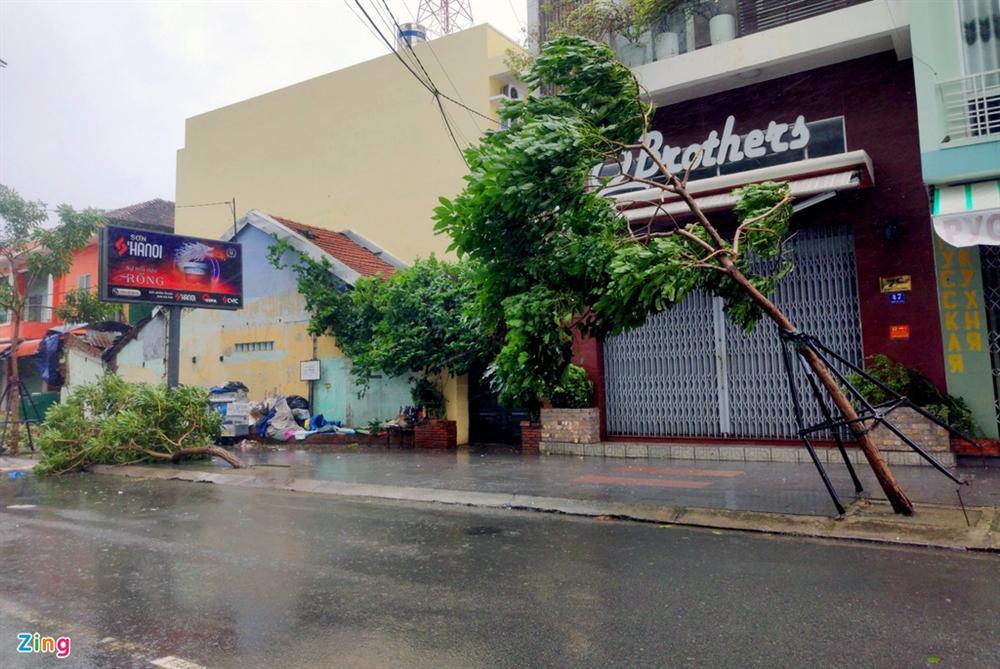Cây gãy đổ la liệt khi bão số 12 quét qua Nha Trang-3