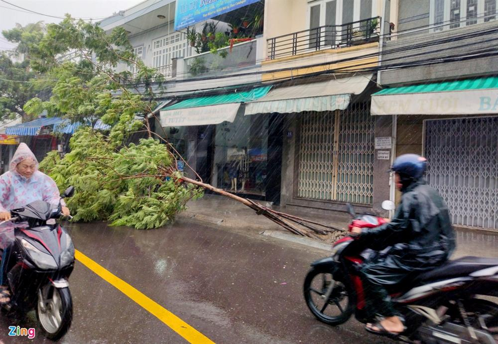 Cây gãy đổ la liệt khi bão số 12 quét qua Nha Trang-6