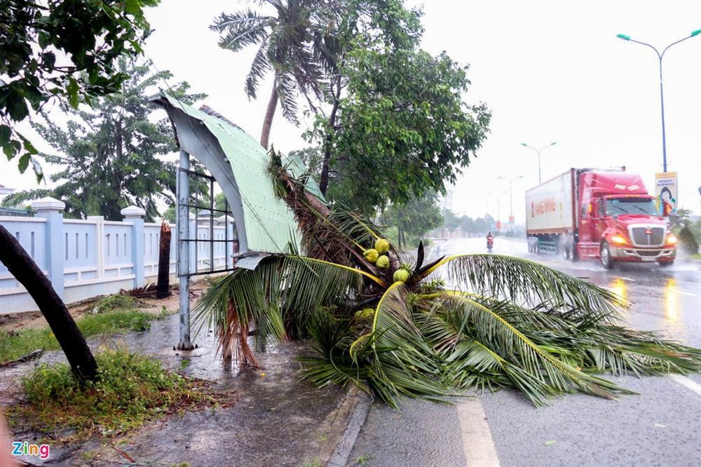 Cây gãy đổ la liệt khi bão số 12 quét qua Nha Trang-11