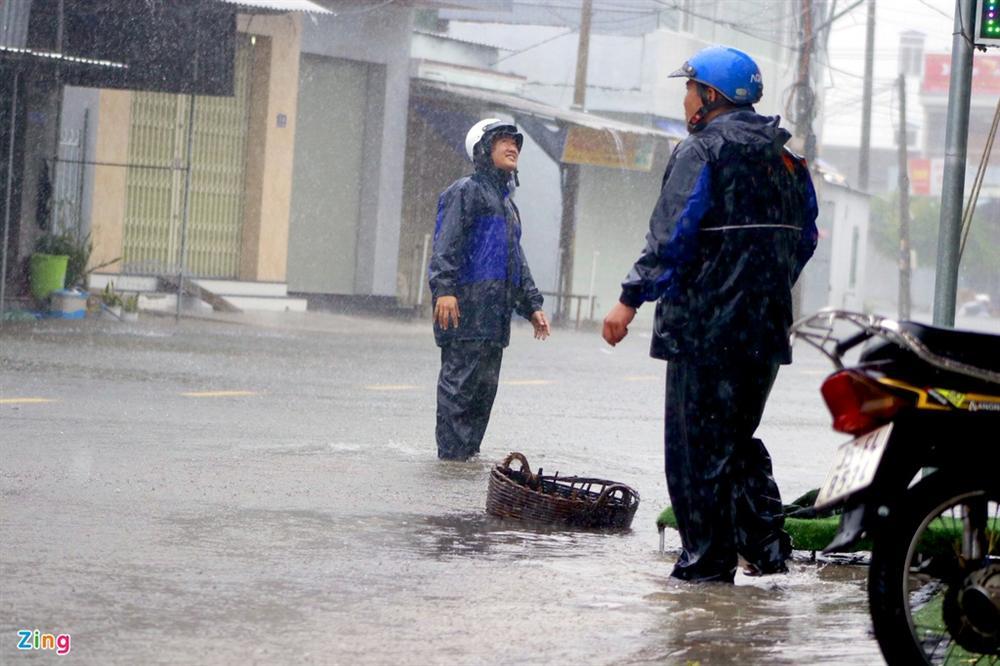 Cây gãy đổ la liệt khi bão số 12 quét qua Nha Trang-12