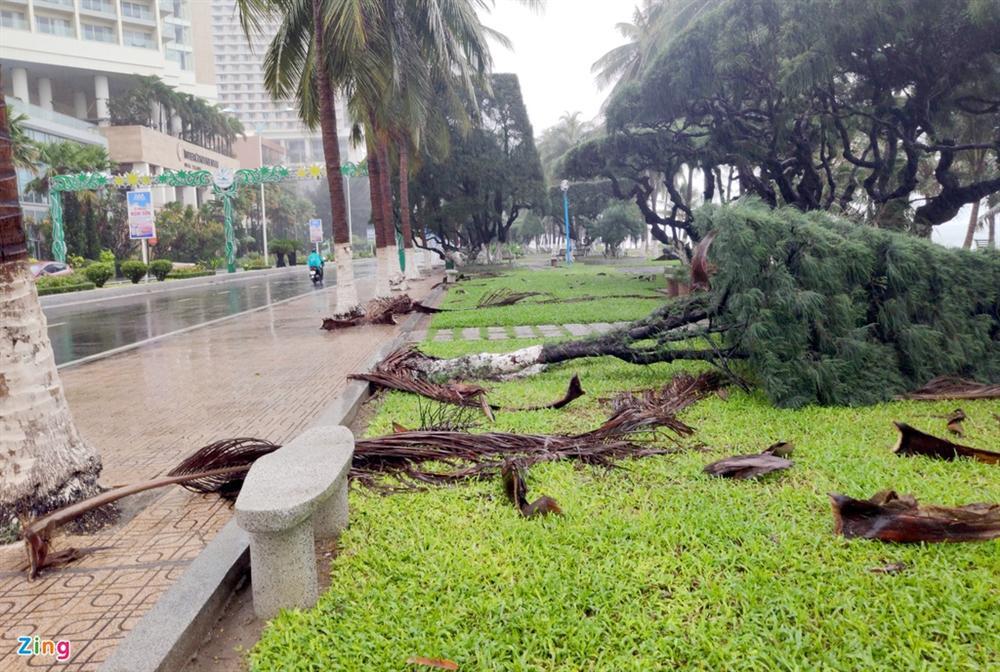 Cây gãy đổ la liệt khi bão số 12 quét qua Nha Trang-8