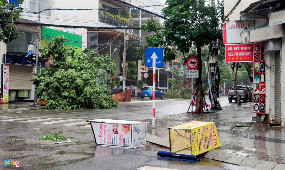 Cây gãy đổ la liệt khi bão số 12 quét qua Nha Trang-9