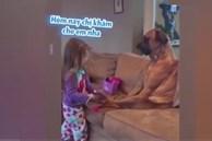 Clip: Chú chó 'nhẫn nhục' làm bệnh nhân cho em bé khám