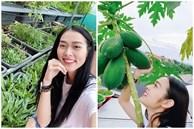 Sân thượng nhiều cây trái và các loại rau của diễn viên Diệp Bảo Ngọc