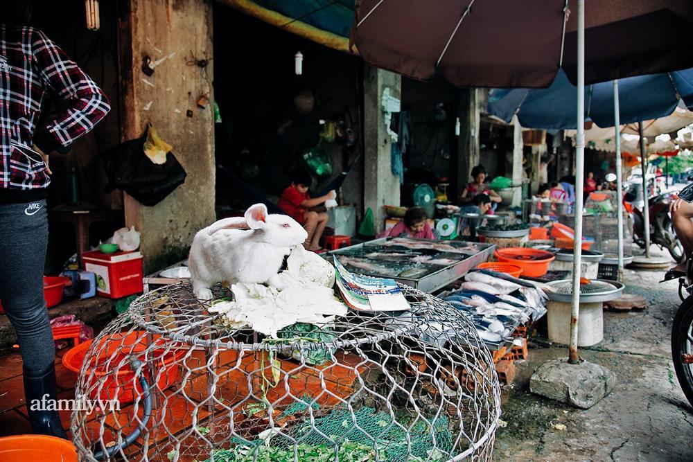 Chuyện lần đầu kể của người phụ nữ... lỡ làm nghề giết mổ động vật và những ánh mắt vô hồn đến ám ảnh tại khu xóm nhỏ chuyên thịt chó ở Sài Gòn-1