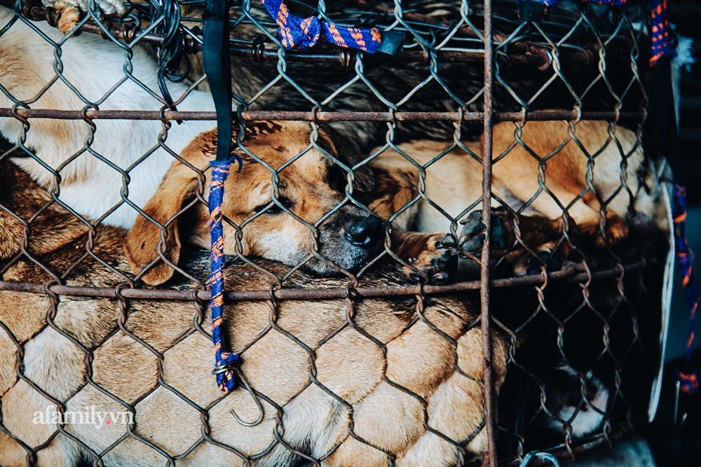 Chuyện lần đầu kể của người phụ nữ... lỡ làm nghề giết mổ động vật và những ánh mắt vô hồn đến ám ảnh tại khu xóm nhỏ chuyên thịt chó ở Sài Gòn-9