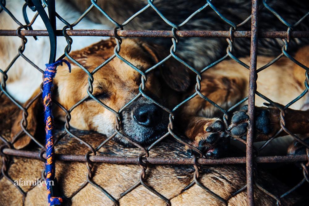 Chuyện lần đầu kể của người phụ nữ... lỡ làm nghề giết mổ động vật và những ánh mắt vô hồn đến ám ảnh tại khu xóm nhỏ chuyên thịt chó ở Sài Gòn-10