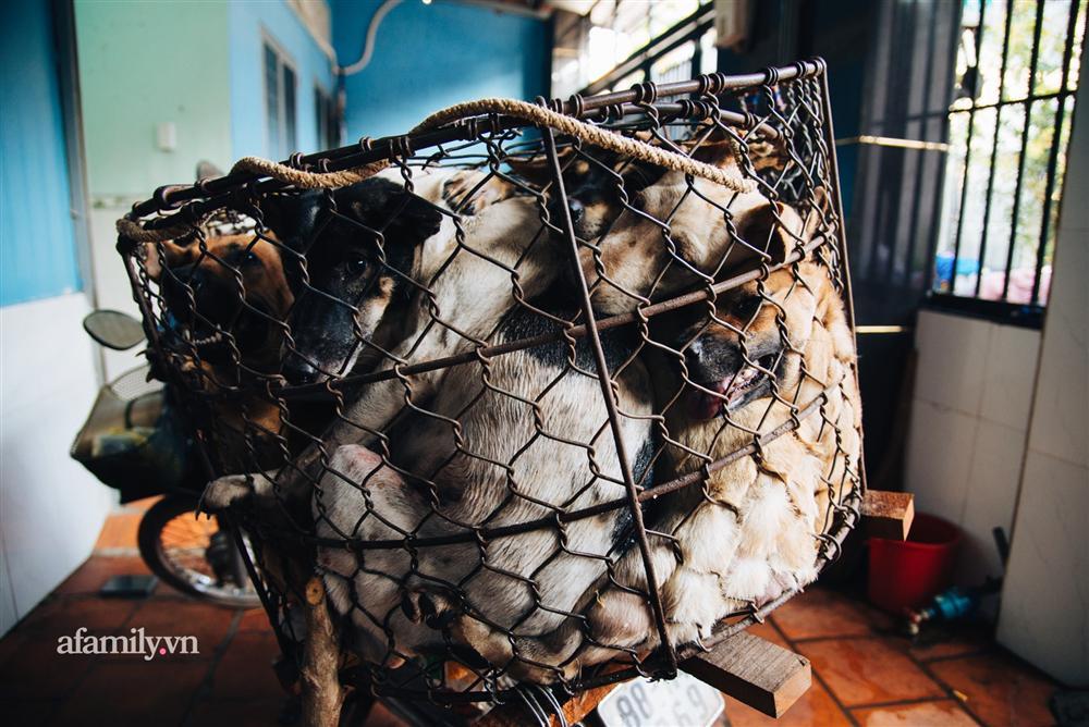 Chuyện lần đầu kể của người phụ nữ... lỡ làm nghề giết mổ động vật và những ánh mắt vô hồn đến ám ảnh tại khu xóm nhỏ chuyên thịt chó ở Sài Gòn-11