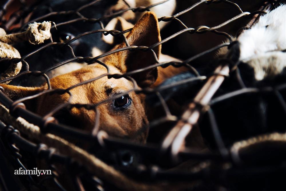 Chuyện lần đầu kể của người phụ nữ... lỡ làm nghề giết mổ động vật và những ánh mắt vô hồn đến ám ảnh tại khu xóm nhỏ chuyên thịt chó ở Sài Gòn-12