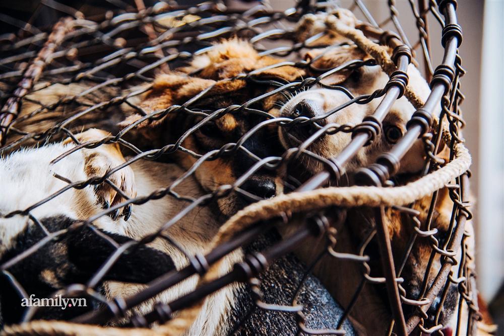 Chuyện lần đầu kể của người phụ nữ... lỡ làm nghề giết mổ động vật và những ánh mắt vô hồn đến ám ảnh tại khu xóm nhỏ chuyên thịt chó ở Sài Gòn-8