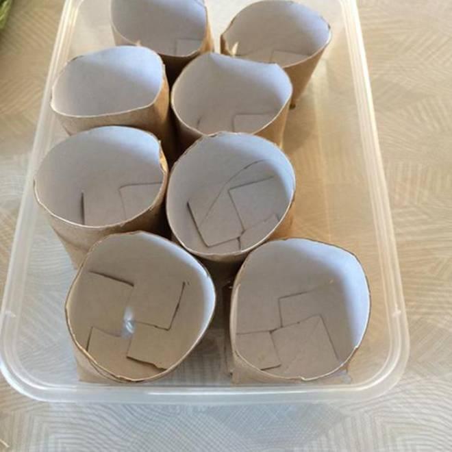 Chỉ mất 5 phút trồng vào lõi giấy vệ sinh, cả năm đỡ tốn tiền mua hành lá-4