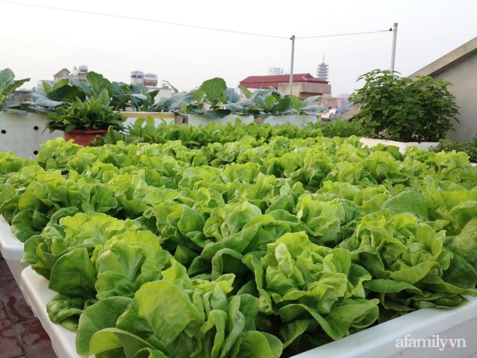 Chi 6 triệu đồng, anh bộ đội phủ kín rau quả sạch trên sân thượng 35m² ở Hà Nội phục vụ gia đình-2