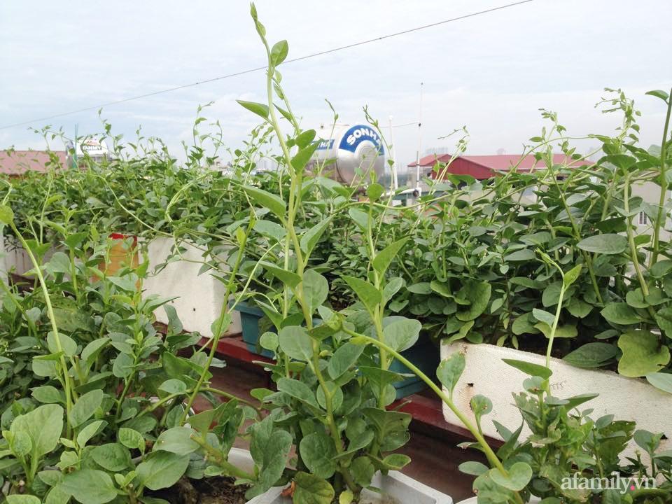 Chi 6 triệu đồng, anh bộ đội phủ kín rau quả sạch trên sân thượng 35m² ở Hà Nội phục vụ gia đình-4